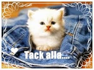 söt katt