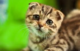 ledsen katt