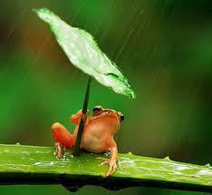 röd groda med blad som paraply