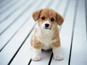 Cute Animal series wallpapers 480x360 (17)