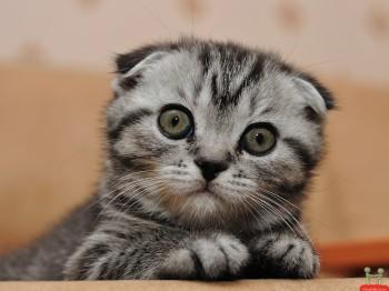 Beautiful Cute Cats HD Wallpaper
