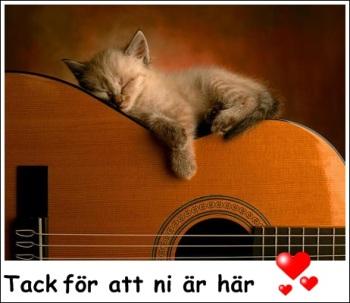 katt på gitarr