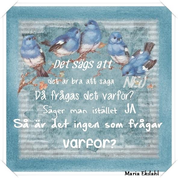 fåglar blå
